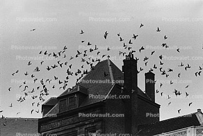 Birds flying, flight, Chimneys, mansion, scary, spooky