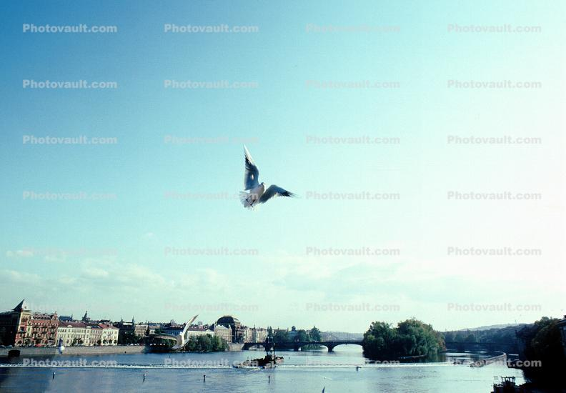 Dove, Prague, Equanimity