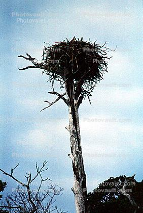 Eagle Nest, Trees