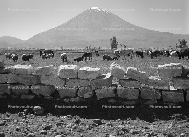 Volcano Peak, Mountain, Stone Wall, rock, sheep