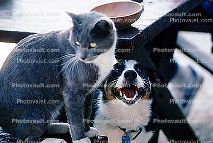 Dog and a Cat, Playing