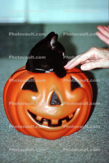 Black Cat inside an orange plastic smiling pumpkin