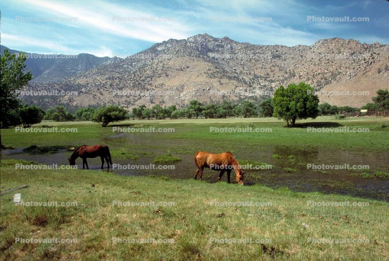 Horse in the Eastern Sierra Nevada Mountains, Kern County, California