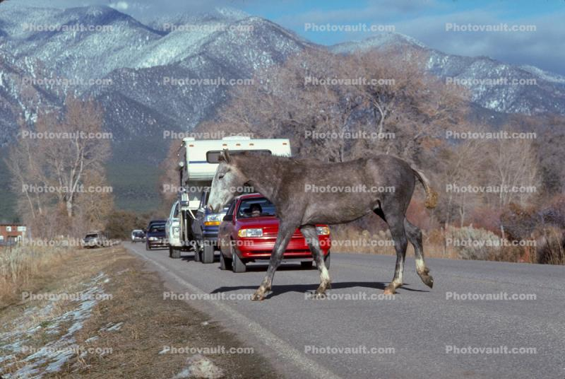 Horse crossing the road, Taos, cars, automobiles, vehicles