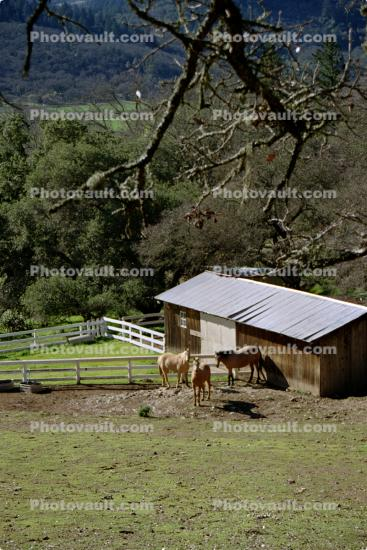 Stables, Horse, Hills, forest, trees, St. Helena, Napa Valley, California