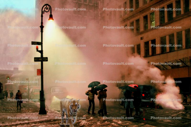 Tiger Walking down a street, surreal, steam, buildings, umbrellas