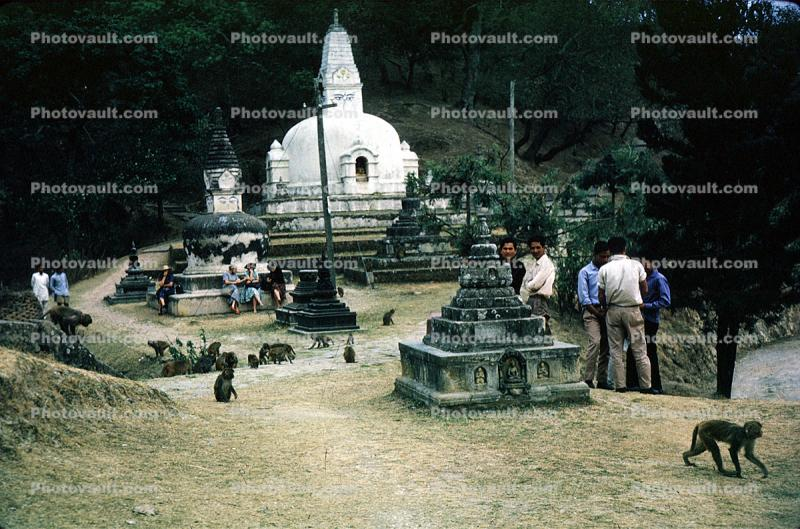 Monkeys at a Buddhist Shrine, Stupa, Sacred Place, temple, building