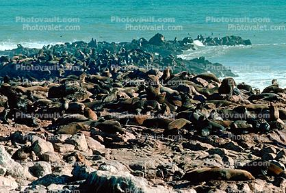 Seals, Cape Cross, Namibia