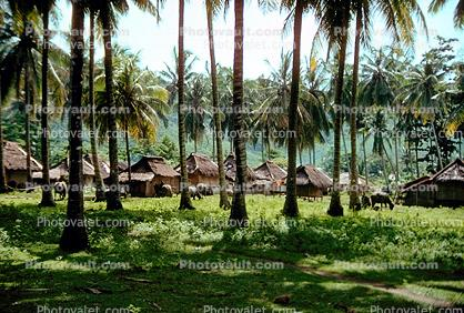 Homes, houses, buildings, palm trees, thatched roof, grass roof, Lombok Island, Sod