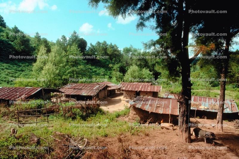 shanty town, homes, houses, jungle
