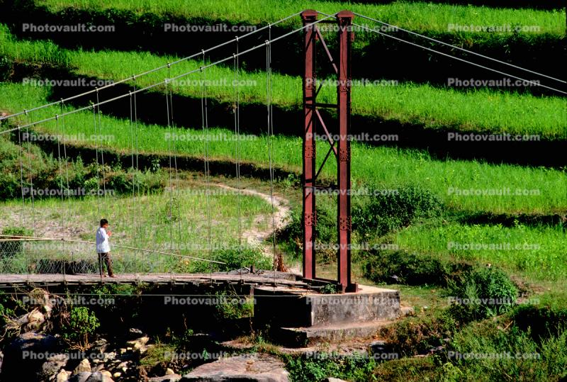 Footbridge, suspension bridge, stepped terrace, Rice
