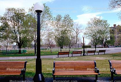 Park Bench, empty, trees, landmark
