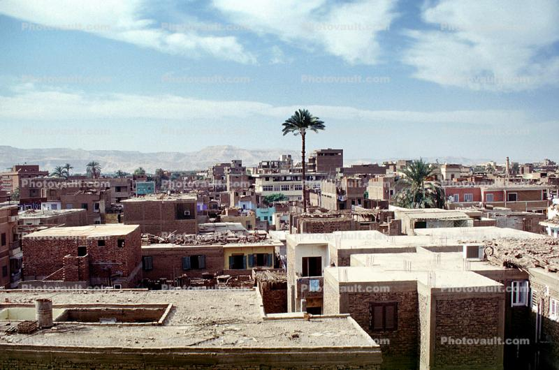 Homes, Buildings, Palm Tree, Cityscape, Luxor