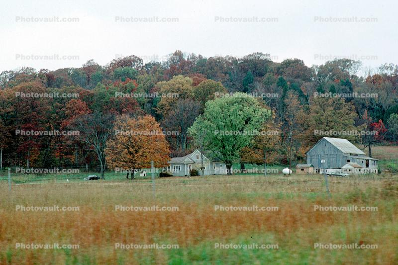 Fall Colors, Farm, Barn, Fields, home, house, building, autumn