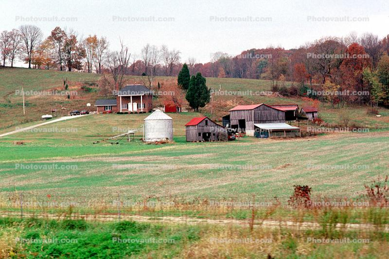 Silo, Fall Colors, Farm, Barn, Fields, shed, home, house, building, autumn