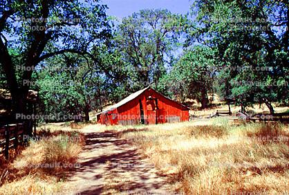 trees, barn, summer, hot day, sunny, dry, outdoors, outside, exterior, rural, building