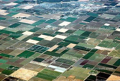 Fields, Central Valley