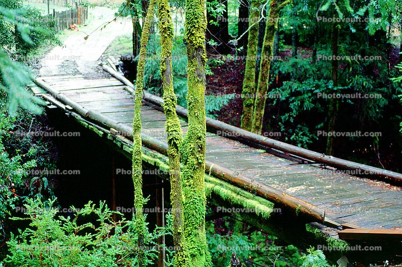 wooden bridge, Mill Valley, Marin County