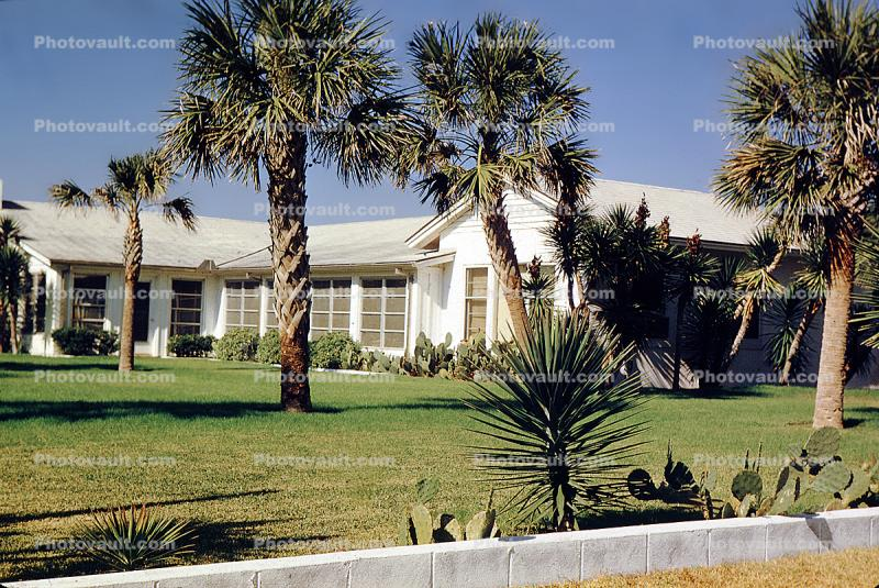 palm tree, home, house, Building, domestic, domicile, residency, housing, Myrtle Beach, Ocean Blvd., Palm Trees