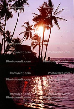 palm tree, sunset, pacific ocean
