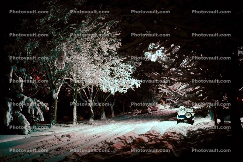 Street, Trees Covered in Snow, snow storm, Nighttime, winter, cars