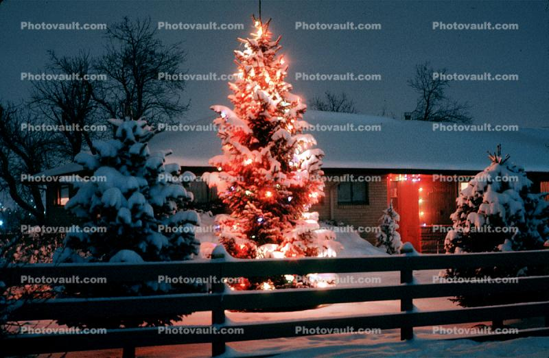 Christmas Tree, Lights, cold, Home, House, domestic, building, Wheat Ridge, Colorado