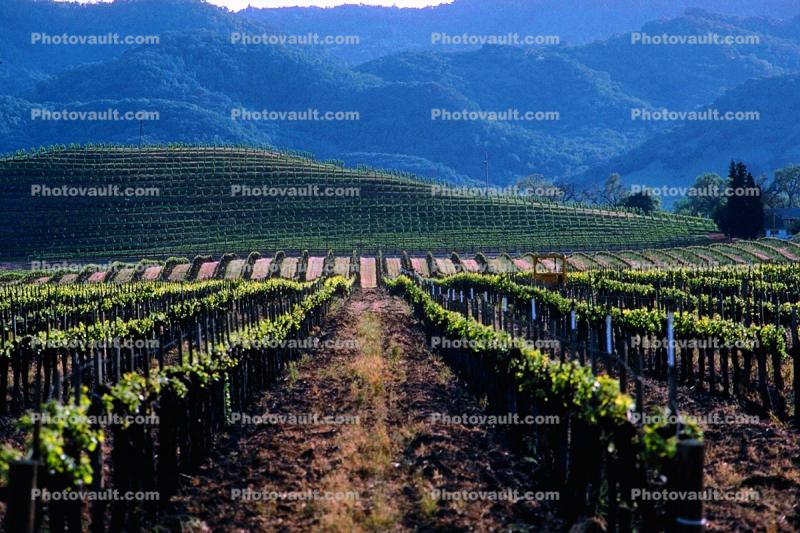 Domaine Chandon, Rows