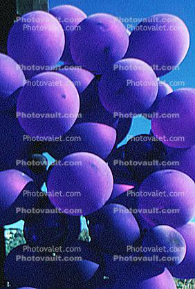 purple grape, Red Grapes, Grape Cluster