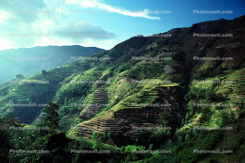 Terraced Rice Fields, Terrace