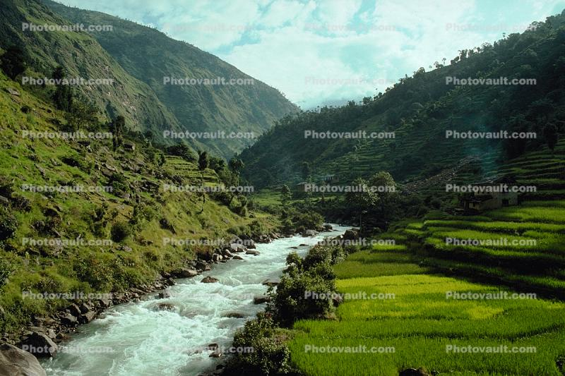 Terraced Rice Fields, Terrace, River, Valley, paddies, hills