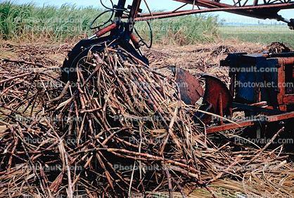 Sugercane, Tractor, Mechanized Farming, Machine, Heavy Equipment