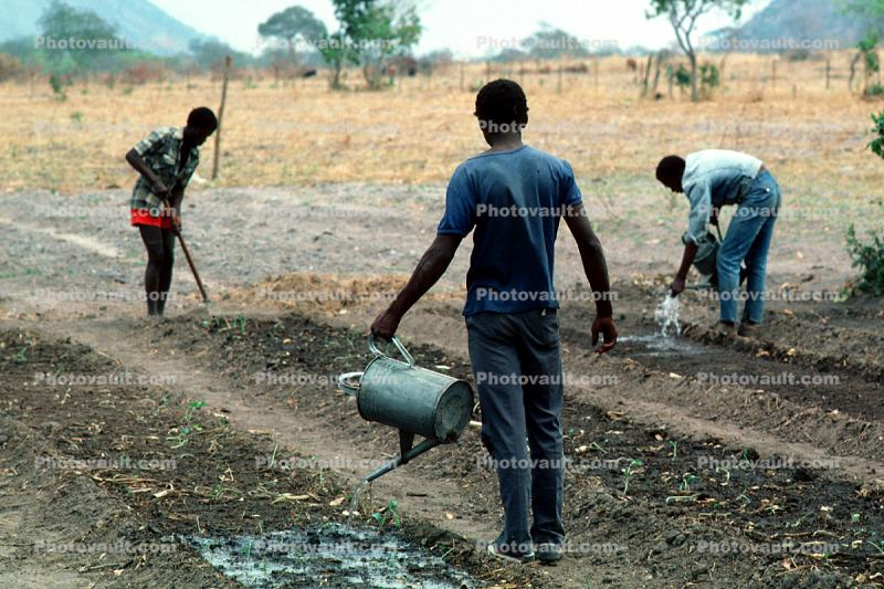 Men, Farmfield, Sowing Seed, Planting