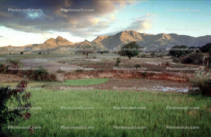 Mountains, rice fields, Ambositra, Madagascar, Rice Paddy, field, water