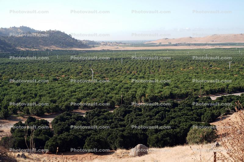 Orange Orchard, Dunlap, Fresno County, San Joaquin Valley
