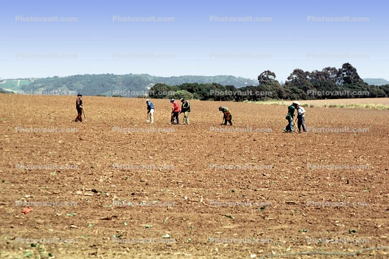 Migrant Farm Workers, dirt, soil