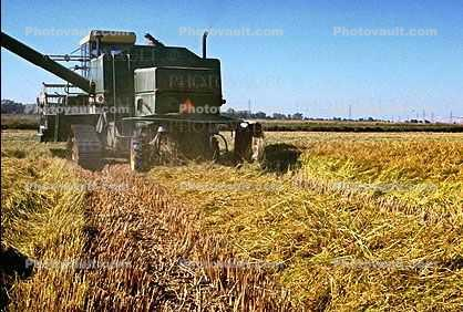 Rice, hay swather, fields, mechanization, machines, harvesting, harvester, Windrower