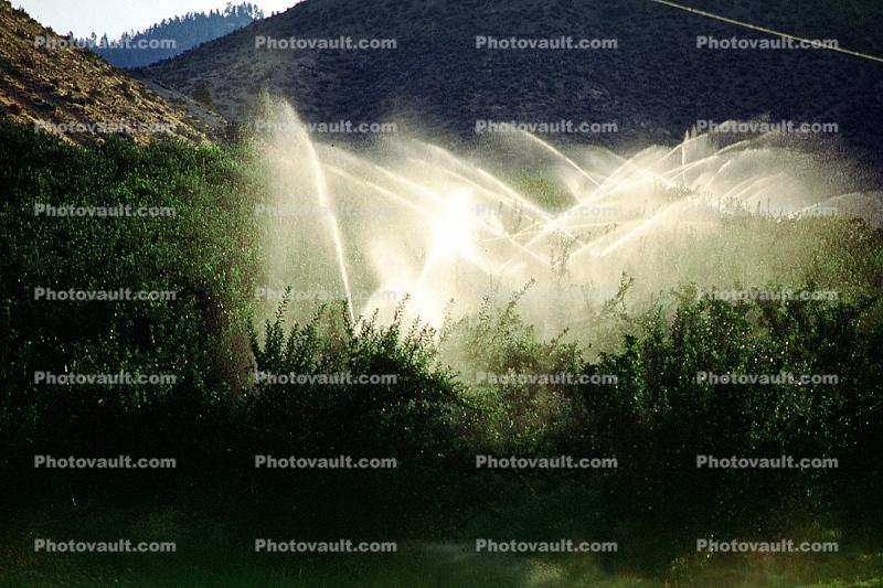 Irrigation, water, sprinkler, along the Columbia River