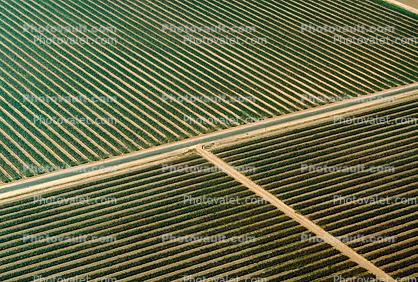 Central Valley, California, patchwork, checkerboard patterns, farmfields, road