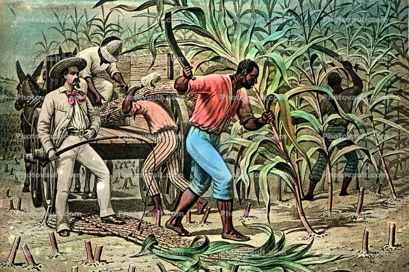 Sugar Cane, White Racist, Slave Trade, Slave owner, southern USA, Domination, Cruel, Southern Hospitality, Oppression, Racism, Racist, slave, slavery