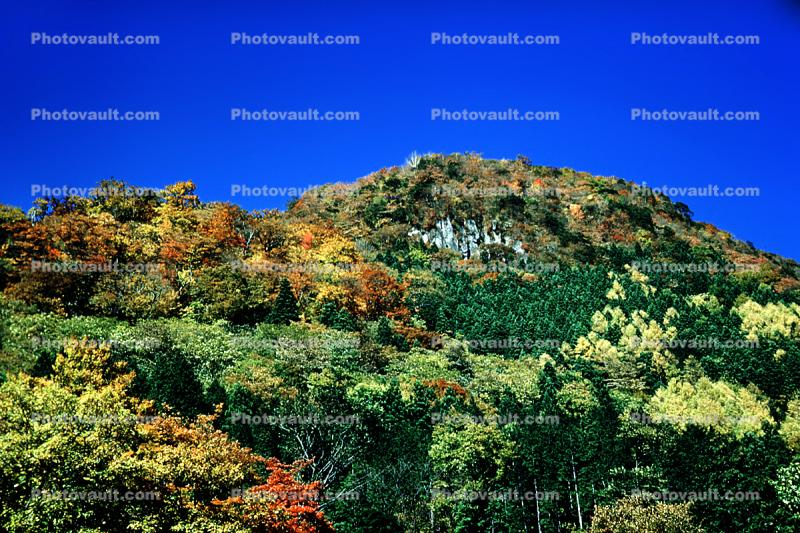 Forest, Woodlands, Mountain, Nikko, autumn