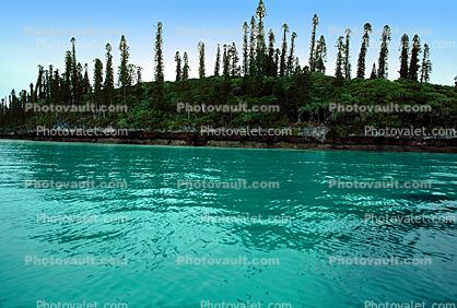 Tropical Island, Coral Reef, Tropical Pine Trees