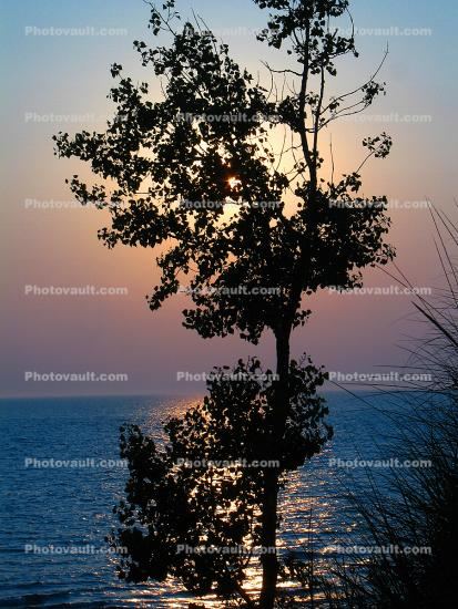 Tree, Beach, Plant, Lake, shoreline, shore, Sunset