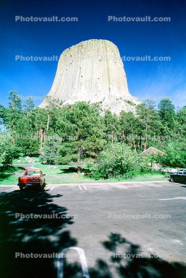 Devils Tower, Ponderosa Pine Forest