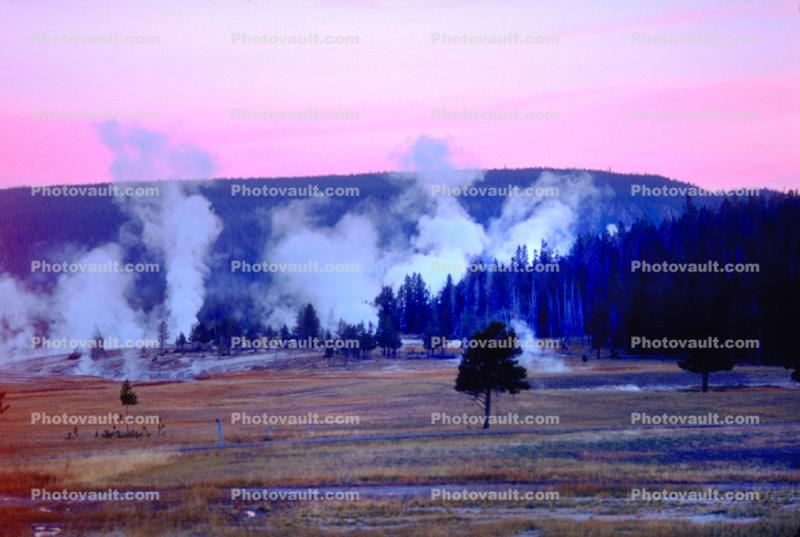 geysers, trees, forest, hills, Hot Spring, Geothermal Feature, activity