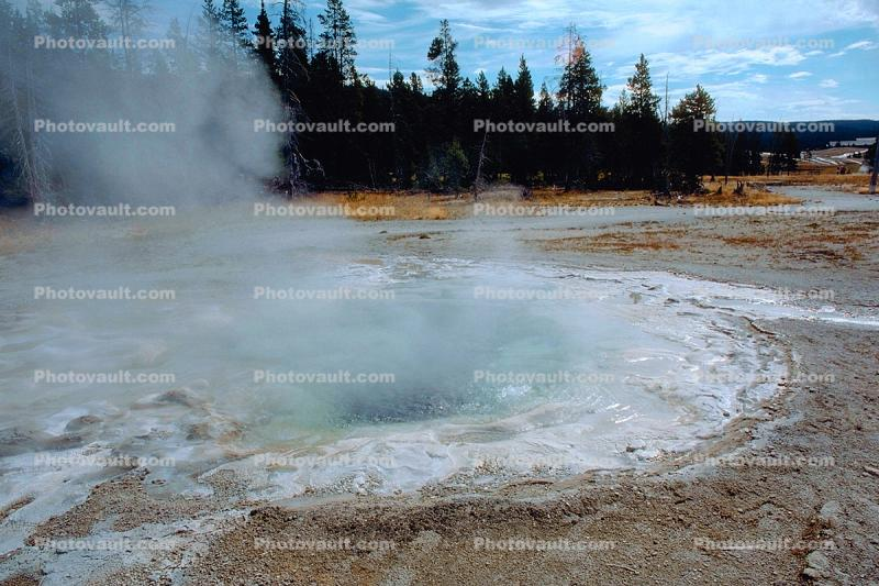 Hot Spring, steam, trees, forest, Geothermal Feature, activity