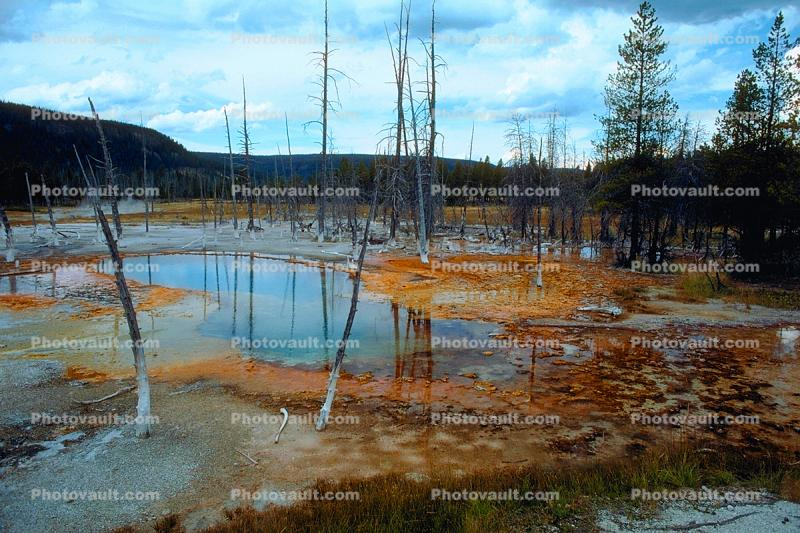 Dead Trees, Hot Spring, Geothermal Feature, activity