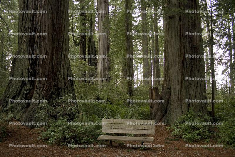 Redwood Forest, Bench