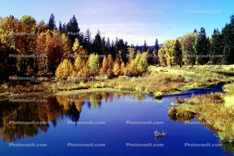 Woodland, Forest, Trees, Hills, Reflecting Lake, autumn, water, Equanimity