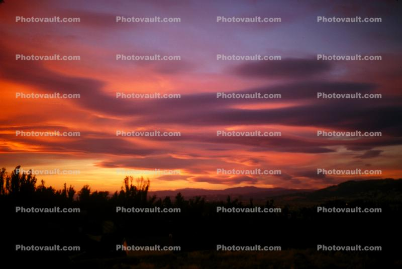 Rose Avenue, Cotati, Sonoma County, Eucalyptus Trees, Sunset, Sunrise, Sunclipse, Sunsight, lenticular