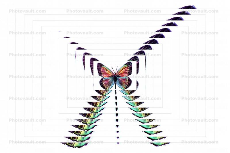 Cavalcade of Butterfly, Repeating Pattern